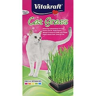 Vitakraft Cat Grass Seed Kit Wheatgrass for Pet, Grow Indoor Treat in Tray 120 Gram (Pack of 6) 51Jr5RHFLFL