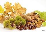 Tischsets Platzsets abwaschbar Autumn von ARTIPICS 4er-Set Kunststoff 42x30 cm