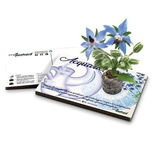 Eco-Postcard | Biglietto d'auguri segno zodiacale Acquario | Regalo compleanno ecologico zodiaco con semi di Borragine | Kit coltivazione pianta di Borragine