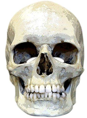 erdbeerclown- Erwachsene Totenkopf Maske, Halloween, Kostüm Zubehör, (Halloween Ganzkörper Katze Kostüm)