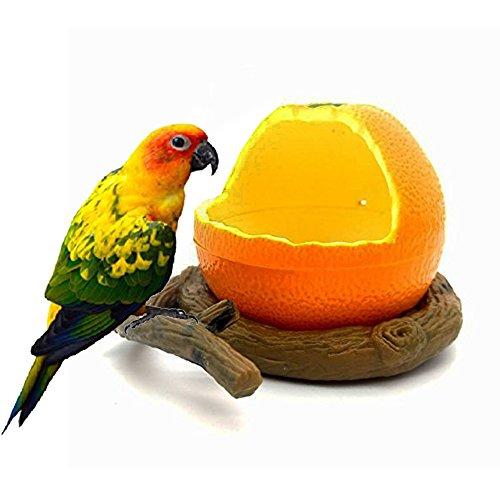 Get It Today Birds - Best Reviews Tips