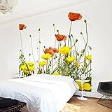Apalis Vliestapete Blumentapete Duo of Flowers Teil 2 Fototapete Quadrat | Vlies Tapete Wandtapete Wandbild Foto 3D Fototapete für Schlafzimmer Wohnzimmer Küche | Größe: 192x192 cm, gelb, 97609