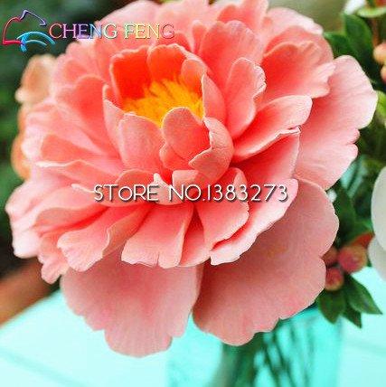 Zoom IMG-2 2016 cinese peonia albero seeds