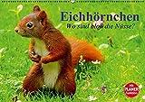 Eichhörnchen. Wo sind bloß die Nüsse? (Wandkalender 2016 DIN A2 quer): Die flinken Kletterer und Nüsseknacker unserer Wälder und Parkanlagen (Geburtstagskalender, 14 Seiten ) (CALVENDO Tiere)