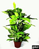Geko 100cm extralarge 1 pezzo artificiale Dieffenachia pianta