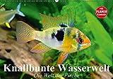 Knallbunte Wasserwelt. Die Welt der Fische (Wandkalender 2017 DIN A2 quer): Die bunte Welt der Fische und Wasserbewohner (Geburtstagskalender, 14 Seiten ) (CALVENDO Tiere)