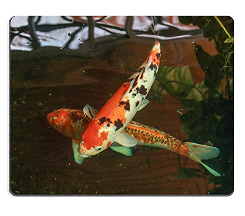 luxlady Gaming Mousepad Bild-ID: 34037475 Karpfen oder Fancy Carp auch bekannt als Fancy Carp schwarz Karpfen oder IX ein Süßwasser-Fische der Fisch japanischen Koi Namens