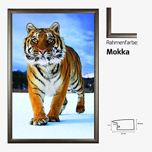 Kunstdruck Poster - Tiger im Schnee Snow Tiere 61 x 91,50 cm mit MDF-Bilderrahmen Pisa & Acrylglas reflexfrei, viele Farben zur Auswahl, hier Mokka (Print Mokka-tiger)