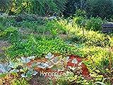 ¡Gran venta! 100 semillas / Semillas Paquete madreselva vid, Naturally Grown, semillas de flores raras para el jardín de bonsai