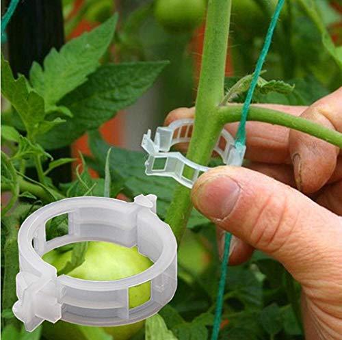 gaddrt clip di supporto di verdure di sostegno della pianta della vite appendente di plastica serra riutilizzabili clips vines fiore per serra da giardino con sostegno gambi, viti
