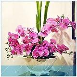 SONIRY 100pcs Phalaenopsis Gaint Fiore Grandi Fiori per pentole in Vita per Le Orchidee per Le Piante