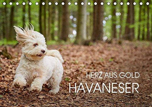 Havaneser - Herz aus Gold (Tischkalender 2019 DIN A5 quer): Havaneser Monatskalender. Ein Jahr mit dem Hund mit dem Herzen aus Gold (Monatskalender, 14 Seiten ) (CALVENDO Tiere)