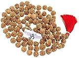 SHIV SHANKAR ACCESSORIES 4 Mukhi Rudraksha Mala/Four Face Rudraksha Rudraksh 15-16 MM - Nepal -109 Bead