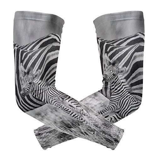 LUPINZ Animal Zebra Family Migrations-Arm Sleeve Kompressions-Armband UV-Schutz Kühlung Sonnenblock für Outdoor-Sport x 1 Paar -