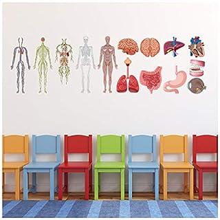 azutura Human Anatomy Biology Medicine Wall Sticker Set available in 8 Sizes X-Small Digital