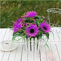 20 piezas de venta caliente Pasar las semillas de girasol orgánica helianthus annuus Semillas semillas comestibles de jardinería ornamental Flores Mini Bonsai 2