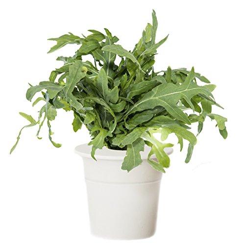 Click & Grow Smart Herb Garden Salad Rocket Refill Cartridge