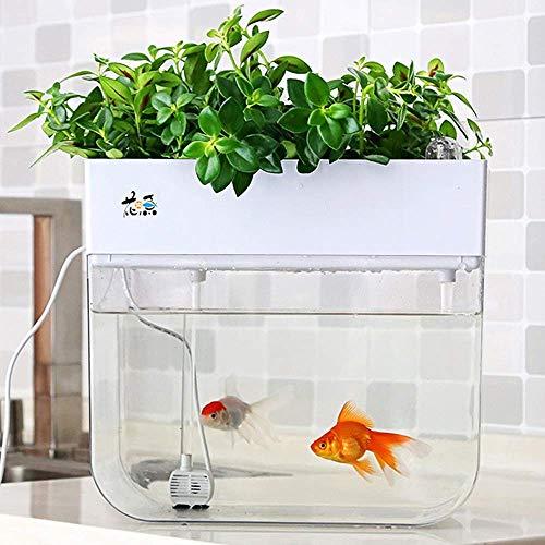 Fish & Aquariums The Cheapest Price Vivaio Acquario Sistema Di Allevamento Dei Pesci Catalogues Will Be Sent Upon Request