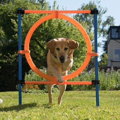 Agility Jumping Hoop Fun & Sport Dog Height-adjustable with stabilising poles Nylon Bag Included for convenient transport