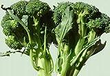 SONIRY Germinación de Las Semillas: Las Semillas de brócoli Calabrese 70G ~ 20,000Ct Survl Alimentos Proteína EE.UU.
