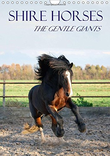 shire-horses-the-gentle-giants-wall-calendar-2017-din-a4-portrait-the-tallest-horse-breed-in-the-wor
