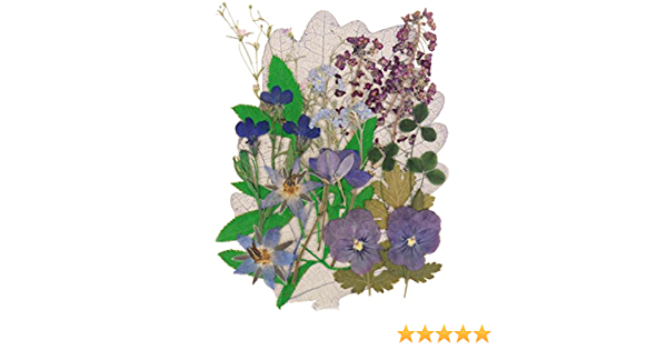 forget me not floral art lobelia pansy alyssum shamrock borage Pressed flowers