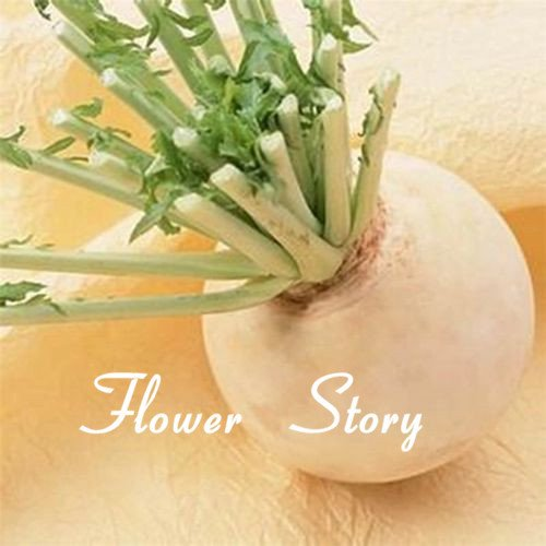 100 Round super doux juteuse non Gmo sain jardin diy Livraison gratuite blanc graines de radis fruits et légumes