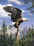 Mammut 107003 - Malen nach Zahlen - Artists Collection klein - Adler