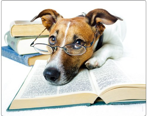 animales-alfombrilla-alfombrilla-para-raton-con-diseno-de-19-jack-russell-terrier-chico-la-lectura-d