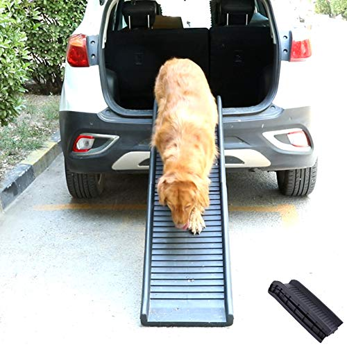 supporto prostatico per cani