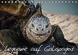 Leguane auf Galapagos (Tischkalender 2019 DIN A5 quer): Urzeitliche Leguane auf den Galapagos Inseln (Monatskalender, 14 Seiten ) (CALVENDO Tiere)