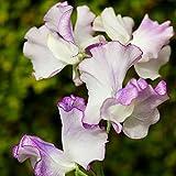 Sweet Pea Butterfly Mix seeds - Lathyrus odoratus -
