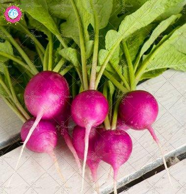 100PCS Graines Radis cerise Potted Radis semences saines délicieux légumes bio Graines Jardin Famille Plantes de Jardin potager