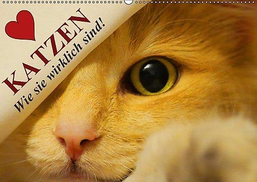 Preisvergleich Produktbild Katzen • Wie sie wirklich sind! (Wandkalender 2017 DIN A2 quer): Die Wahrheit über Katzen! (Monatskalender, 14 Seiten ) (CALVENDO Tiere)