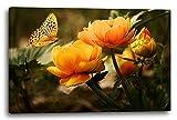 Printed Paintings Leinwand (120x80cm): Blumenbilder Schmetterling auf Gelb-Orangen Blumen