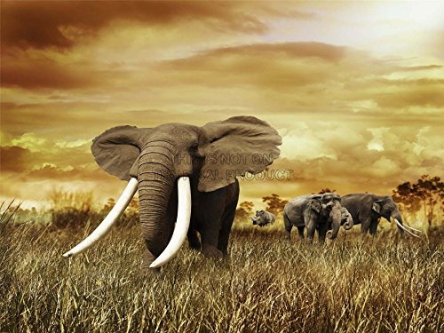 mp-photography-composition-nature-elephant-tusks-sunset-safari-18x24-inch-art-poster-print-picture-l
