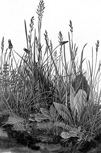 Bilderdepot24 Vlies Fototapete Albrecht Dürer - Alte Meister - Das große Rasenstück - schwarz Weiss - 120x180 cm - mit Kleister - Poster - Foto auf Tapete - Wandbild - Wandtapete - Vliestapete (Schwarz Und Weiß-unkraut-poster)
