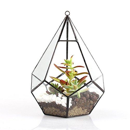 Flores para colgar de maceta, y & M (TM) colgante de 6,8cm, terrario jarrón de cristal flor Aire maceta contenedor casa oficina decoración de la boda.