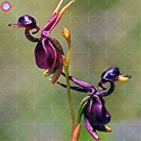 Orchidee Da Esterno.La Casa Delle Orchidee Piante Da Esterno Piante Amazon It