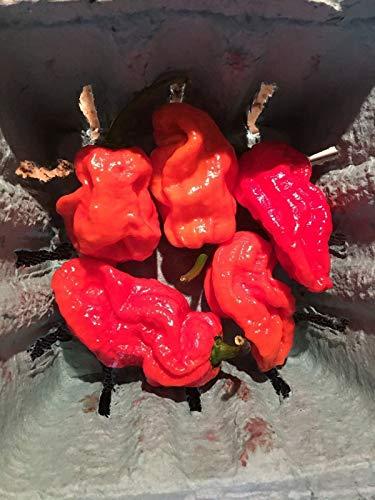 Go Garden Trã¨s Red Hot 7 poivrière, de 30 graines de Peppers éNormes, Non Ogm Plante wows