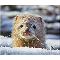 Suchergebnis Auf Amazonde Für Hamster Malen Nach Zahlen Kinder
