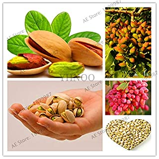 Pinkdose Big Sale! Nut Tree Pistachios Garden Chinese Pistacia Rare Outdoor Fruit Tree Flores Tropical Plant Bonsai plantas Easy to Grow