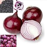 100 semi/pack Cipolla vegetale primavera Cipolla rossa semi Home Per piantare la coltivazione del paese