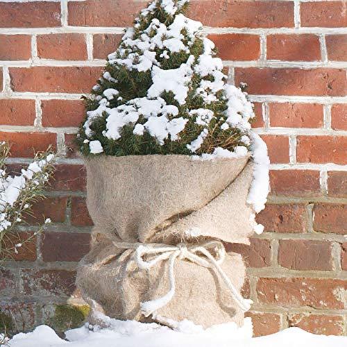 AFP Jutefilzmatte Winterschutz Pflanzen, Natur, 50 x 300 cm/Naturmaterial Jutefilz/Stammschutz Bäume/Frostschutz Kübelpflanzen/Deko / 2 Jutesäckchen gratis