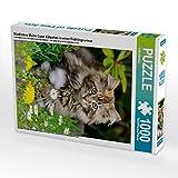 Niedliches Maine Coon Kätzchen in einer Frühlingswiese 1000 Teile Puzzle hoch: Eine süße junge braun getigerte Maine Coon Katze sitzt im Garten, ein neugierig blickenden Augen (CALVENDO Tiere)