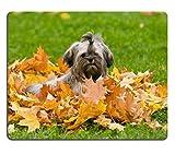 Liili Mauspad Naturkautschuk Mauspad Bolonka Zwetna ZWETNA für einen Walk In The Park im Herbst...