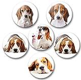 Merchandise for Fans Beagle Welpe und ausgewachsen - 6 große Kühlschrankmagnete Ø 5 cm [ 04 ] für Memoboard Pinnwand Magnettafel Whiteboard