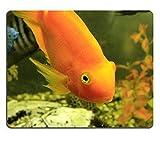 luxlady Naturkautschuk Gaming Mousepads Tropische Exotische Fische in der Nähe der Unterseite Bild-ID 26183265