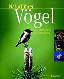 Naturführer Vögel - Reinhard Witt