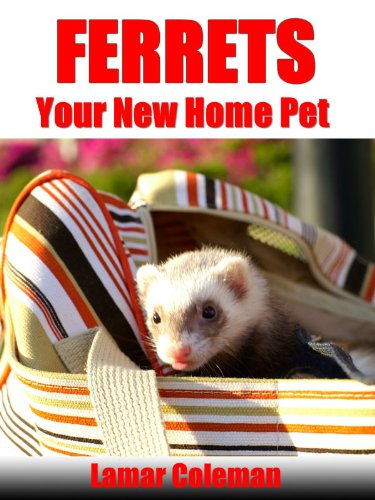 Ferrets Your New Home Pet